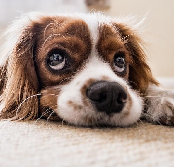 Purinarmes Hundefutter: Damit auch jeder Hund ein unbeschwertes Leben führen kann